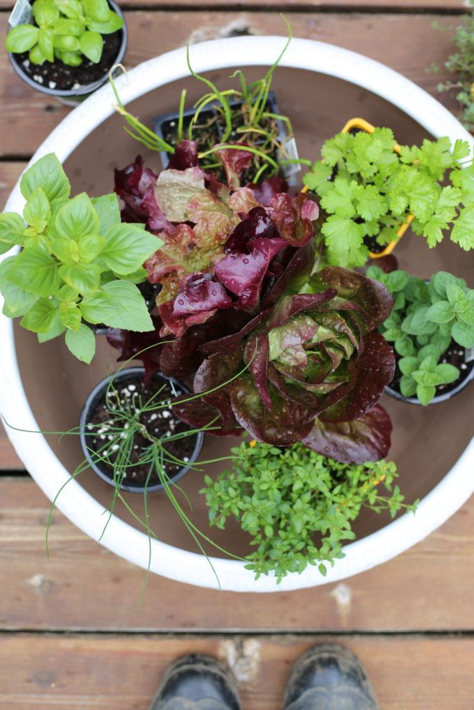 Gardening Fun with 2 Lenses DIY Living Uncatagorized
